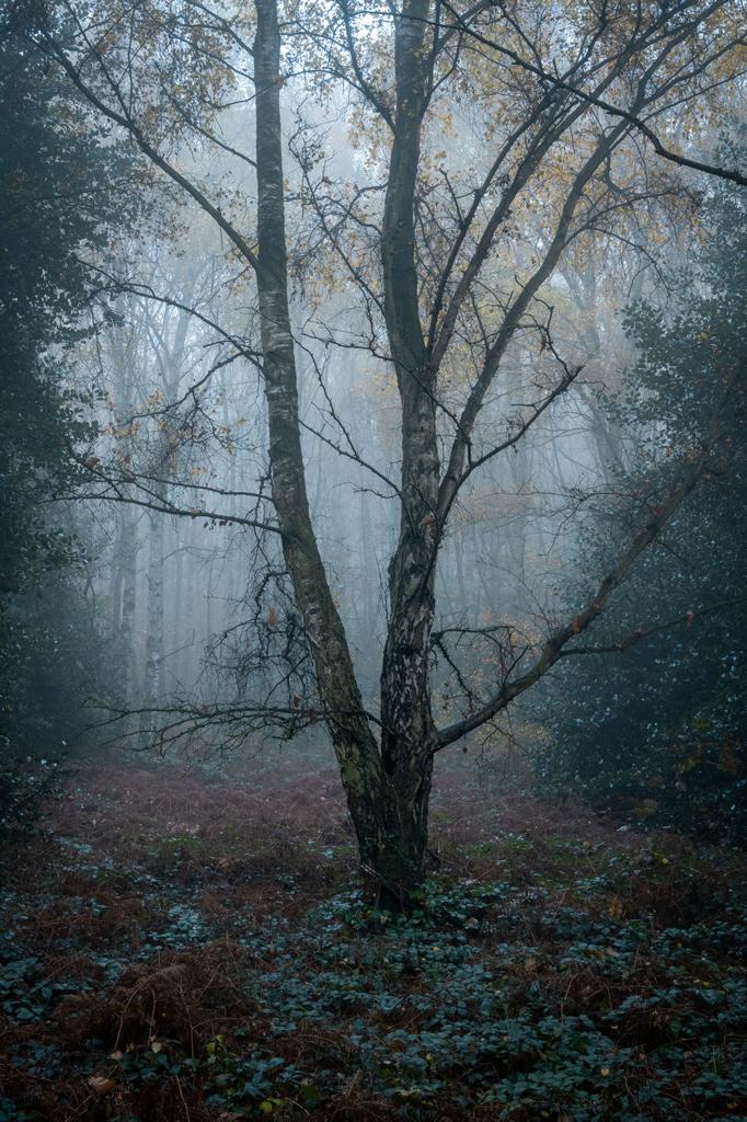 Photo 31 by Robert Bishop